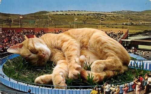 мир населён гигантскими кошками