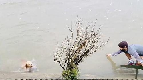пёс свалился в реку и был спасён