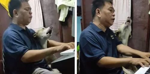 пёс музицирует с хозяином