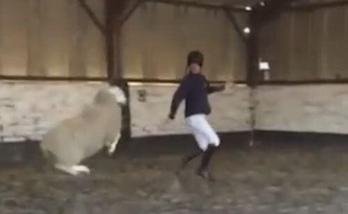 овца осваивает танцы