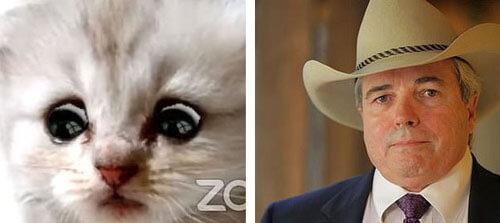 юрист превратился в милого котёнка