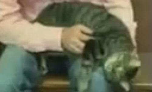 кот пропал на четыре года