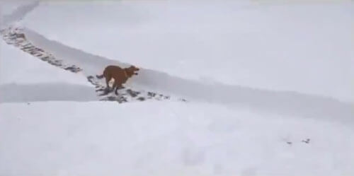 гоночная трасса для собак
