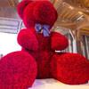 рекордный медведь из роз