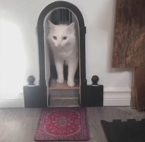 doorways for cats