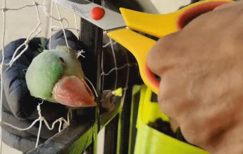 попугая выстригли из сетки
