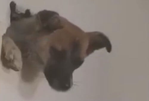 щенок спрятался от фейерверков