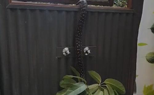 змея сломала комнатное растение