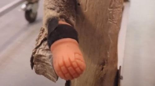 коала родилась без лапы