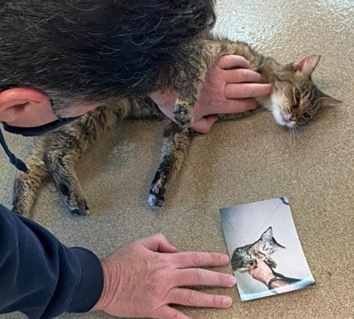 кошка давно пропала и нашлась