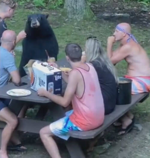медведь на семейном пикнике