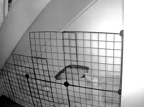 крольчиха высоко прыгает