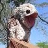 большеротая птица-призрак