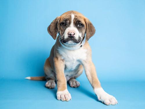 брошенный усатый щенок