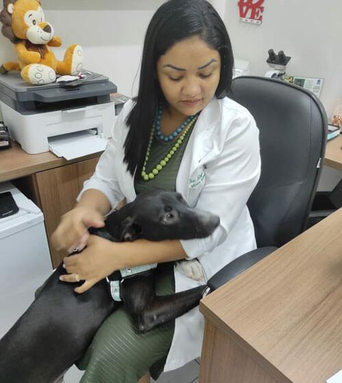 пёс забрёл в ветеринарную клинику