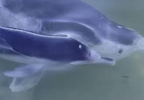милый новорожденный дельфин