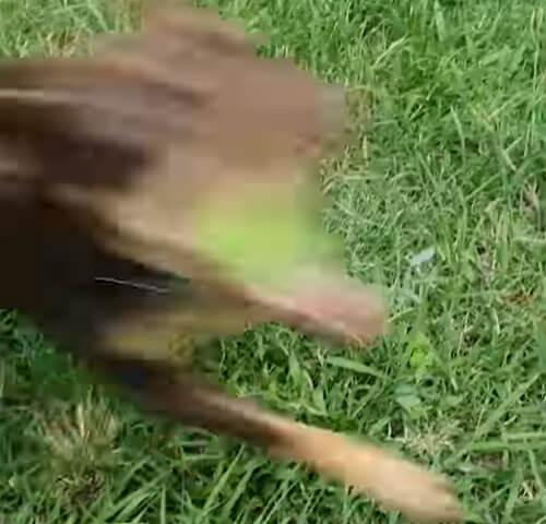 собака со скоростью света