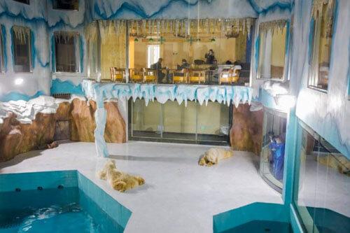 отель с белыми медведями
