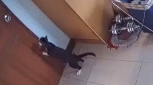кошка выходит из комнаты