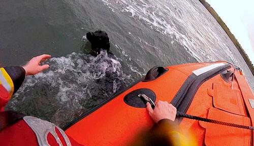 лабрадор бросился в море за мячом