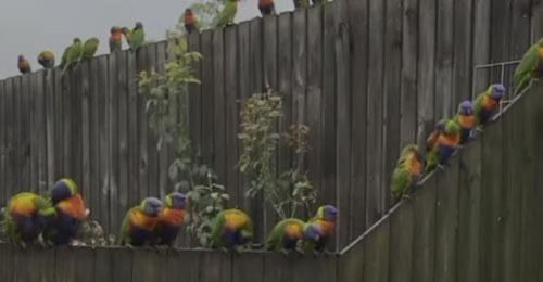 к домовладельцам прилетают попугаи