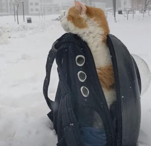 кот не хочет гулять под снегом