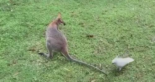 подлое нападение попугая