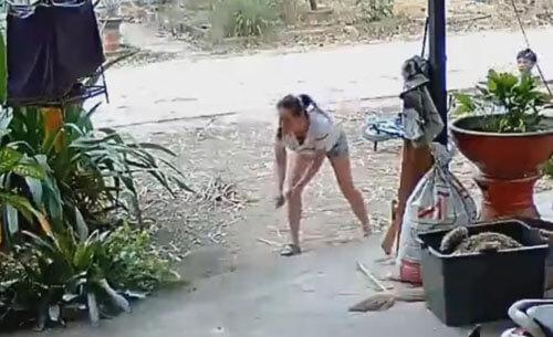 кобру избили метлой