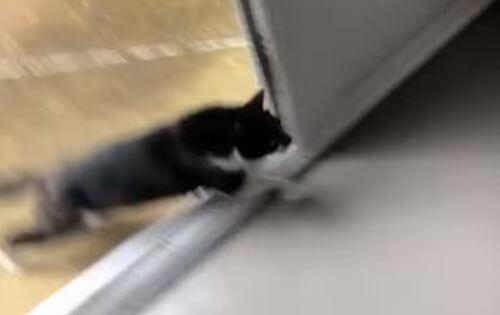 кошка уничтожила новый пол