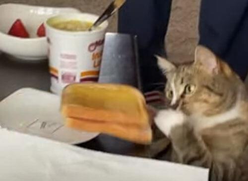 кошка замыслила воровство