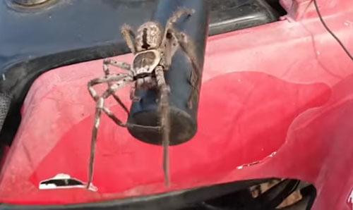 поездка на квадроцикле с пауком