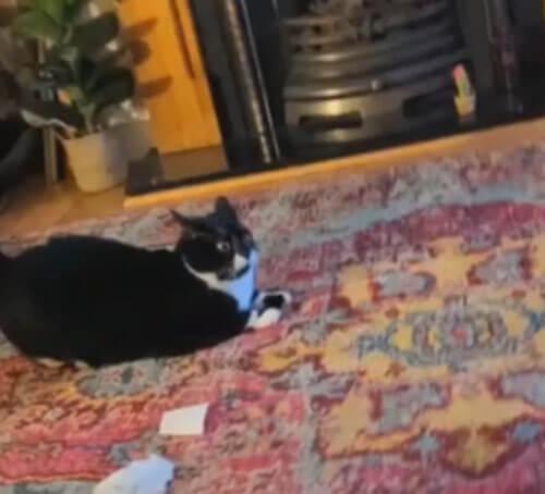 кот с испуганными глазами