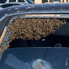 firefighter coped with a swarm of bees