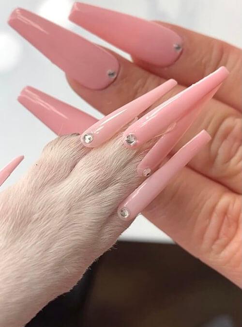 накладные ногти для собаки