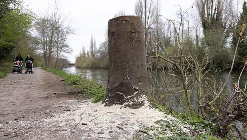 злодей объявил войну деревьям