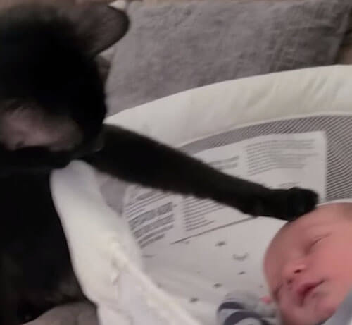 кошку заинтересовал младенец