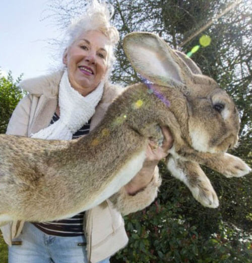 кролика-рекордсмена украли
