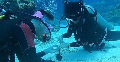 предложение сделали на дне океана
