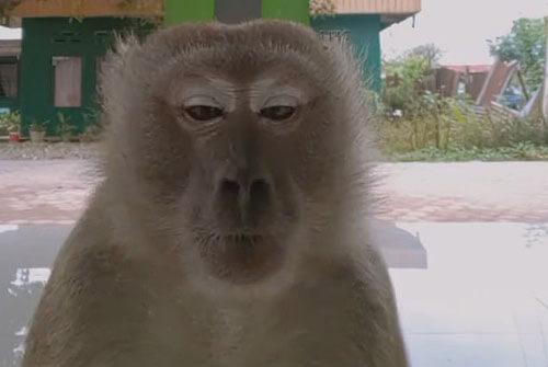 танцевальное шоу с обезьяной