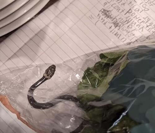 ядовитый змеёныш в салате