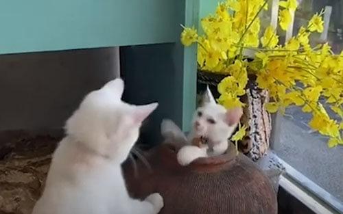 кошачья игра с глиняным горшком