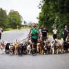 прогулка с множеством собак