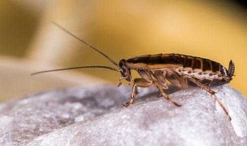страх жены перед тараканами