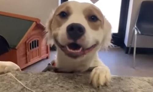 собаку забрали из приюта