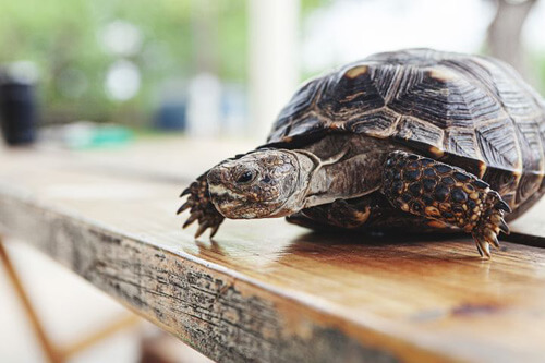 пострадала от летающей черепахи