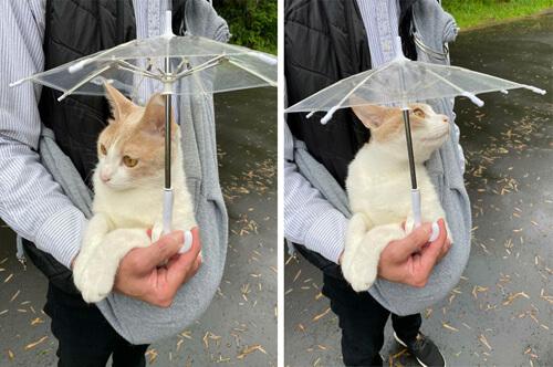 коту подарили маленький зонтик