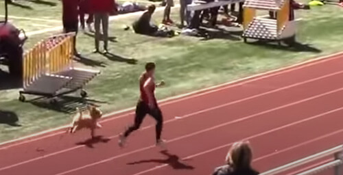 собака на соревновании по бегу