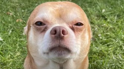 пса обозвали худшим в америке