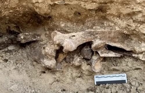 кости нашли на заднем дворе