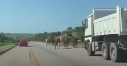 забег лошадей на трассе